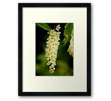 Blossoms  Framed Print