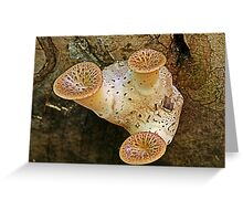 triangle fungi Greeting Card