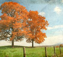 Colors of Autumn by Darren Fisher