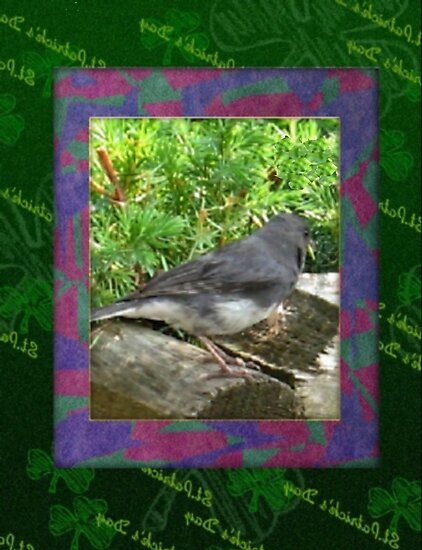 Carolina bird on St. Patty's Day card by ♥⊱ B. Randi Bailey