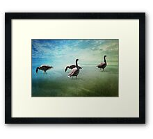 Going for a paddle! Framed Print