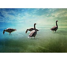 Going for a paddle! Photographic Print
