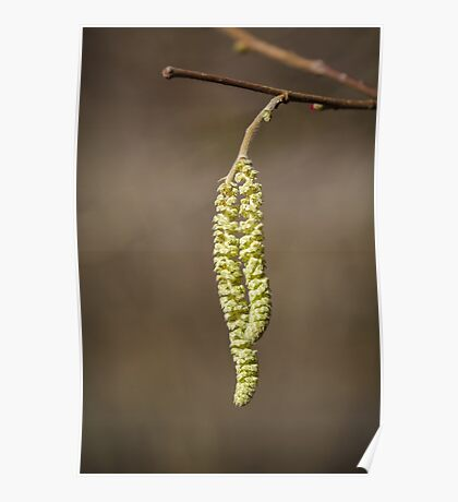 Catkins  Poster