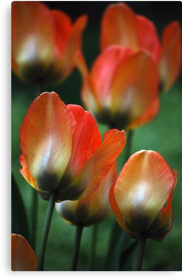 Painted Petals by Joanne  Bradley