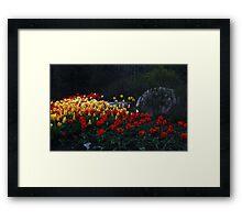 Tulips At Dusk Framed Print