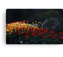 Tulips At Dusk Canvas Print
