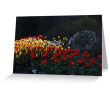 Tulips At Dusk Greeting Card