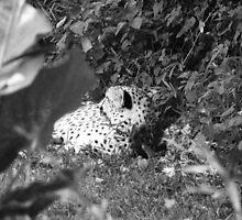 Cat Nap by Kate Robichaud