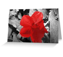 Selective Colored  Red Flower Greeting Card