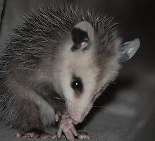 Baby opossum by RunningBackward