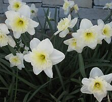 Daffodil Den by MarianBendeth