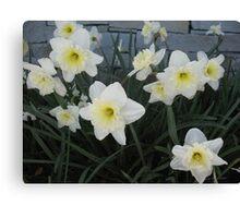 Daffodil Den Canvas Print