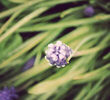 Little Flower by Michael Garrison