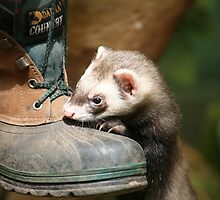 If the boot fits by elaine pearson
