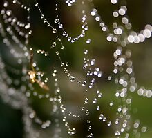 Morning Dew by Adoni