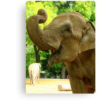 elephant begging for peanuts Canvas Print