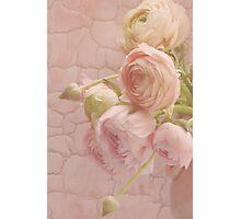 Fresh Picked Pink Photographic Print