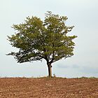 Lone Tree in Dry Land by Yannik Hay