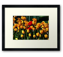 MOTHERS DAY SPECIAL Framed Print