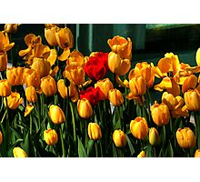 MOTHERS DAY SPECIAL Photographic Print