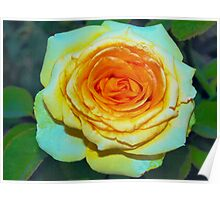 Full yellow rose with peach highlights Poster
