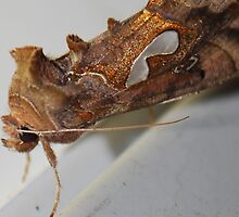 Unusual Moth II by Terra 'Sunshine' Gilbert