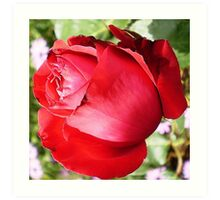 Ruby Red Rose  Art Print