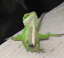Green Anole behavior by JeffeeArt4u