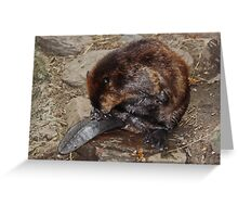 Beaver About Greeting Card