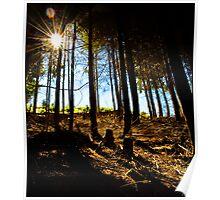 Forest around Queenstown. Poster