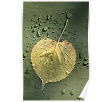 Yellow Leaf after the Rain Poster