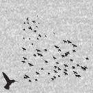 birdy birds by nik vyas