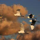 Back to the Roost by byronbackyard