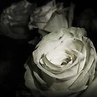 Row of Roses by MichelleRees