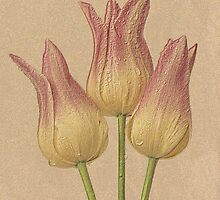 Tulips - colored pencil effect by mklue