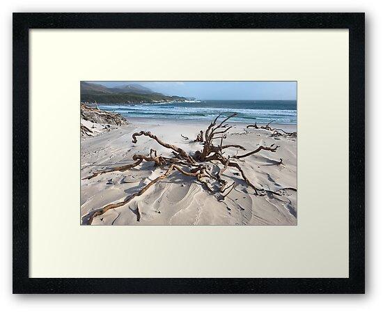 Southwest Tasmanian coastline by tasadam