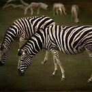 Zebra crossing by Lissywitch