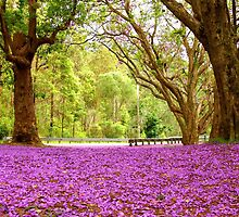 Jacaranda Heaven - Springbrook - Hinterland - Gold Coast - Queensland - Australia by AMP  Al Melville Photography