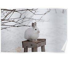 Shhh! I'm a Bird ... Tweet! Tweet Poster