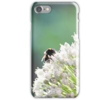 Bumblebee pollinating onion flower. A bee collects nectar from a flower bow iPhone Case/Skin