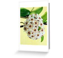 Hoya 2 Greeting Card