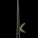 Tightrope walker by iamelmana