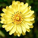 One Yellow Flower by SESE