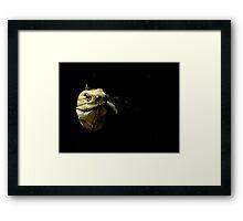 Peek-A-Boo !!! Framed Print