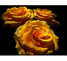 Roses for Mother. Photographic Print