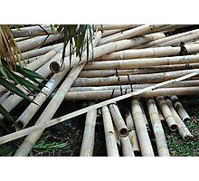 bamboo trees Photographic Print