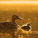 Duck Family by Alina Kurbiel