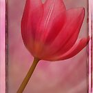 Pink Tulip worked by Hugster62