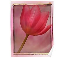 Pink Tulip worked Poster