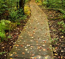 Board Walk - Mer Bleue Conservation Area, Ottawa, Ontario by Bill McMullen